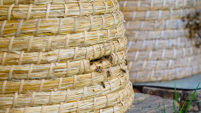 Echte Bakker Frentz - Bakkersgeheimen - Op de bres voor de bedreigde bij honing